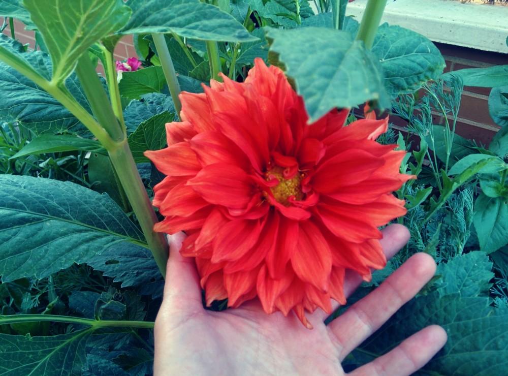 huerto de flores