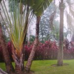 paisajismo dominicana
