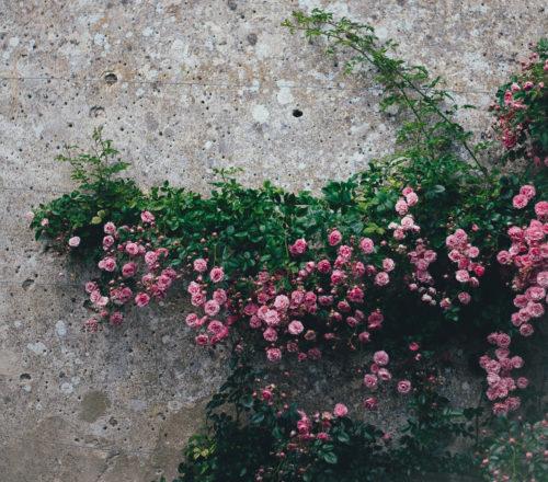 jardín huerta