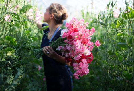 los mejores blogs de jardines